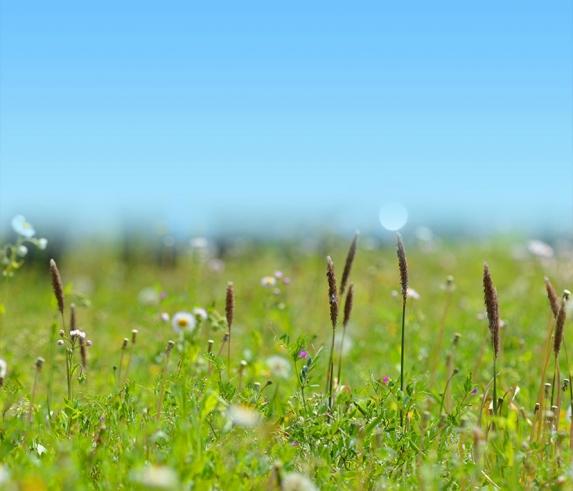 初夏の高原